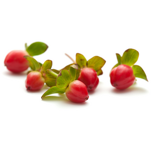 Hypericum rouge (10 tiges)