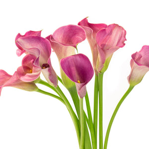 Calla rose (10 tiges)