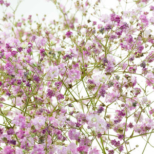 Gypsophile Perfecta rose (10 tiges)