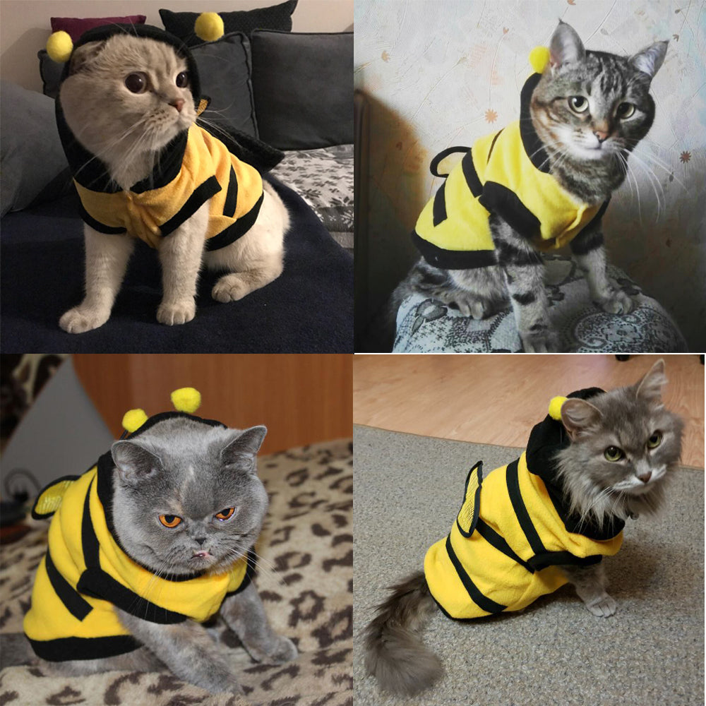 Fancy Cat Clothes Teddy