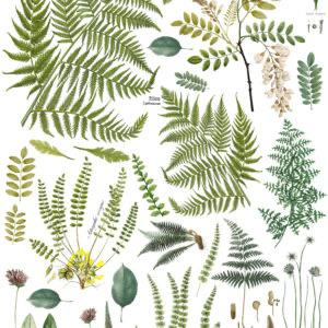 Fronds Botanical 24x33 Decor Transfer
