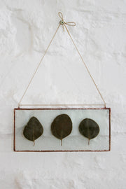 Pressed Eucalyptus Botanical Decor
