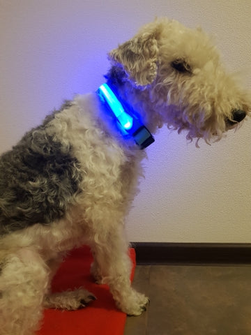 USB Rechargeable LED Pet collar