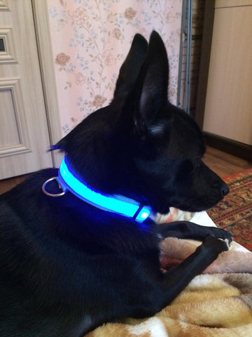 Image of USB Rechargeable LED Pet collar