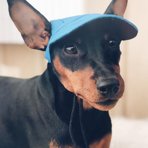 Image of Adorable Dog Hat (Protect your dogs eyes from sun the sun)
