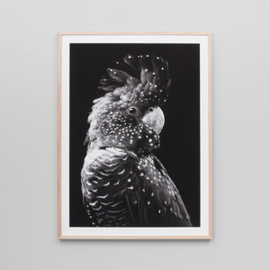 Middle of Nowhere - Black Cockatoo Grey Framed Print