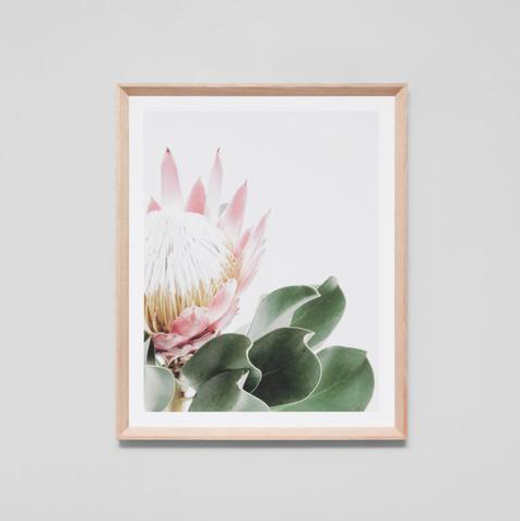 Middle of Nowhere - Protea Portrait Framed Print