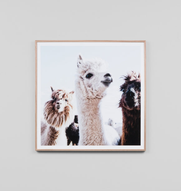 Middle Of Nowhere - Llama Friends Framed Print