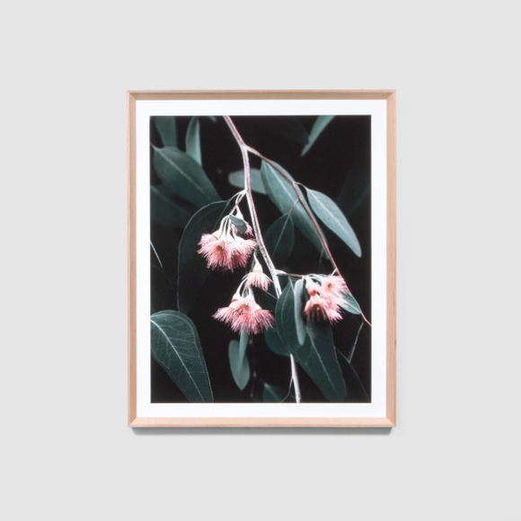 Middle of Nowhere - Eucalyptus Blossom Framed Print