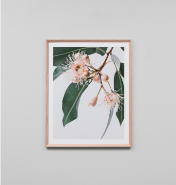 Middle of Nowhere - Eucalyptus Flower 2 Framed Print