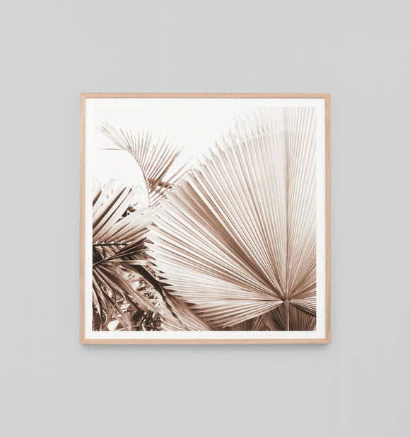 Middle of Nowhere - Desert Palm 1 Framed Print