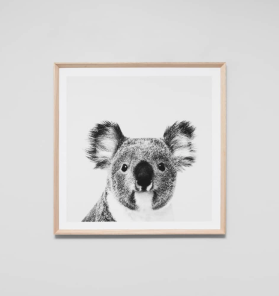 Middle of Nowhere - Koala Portrait Framed Print