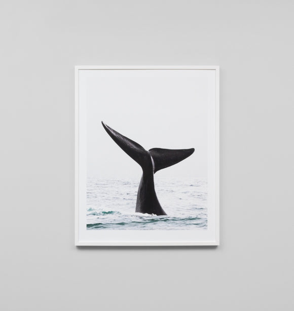 Middle of Nowhere - Whale Tail Framed Print