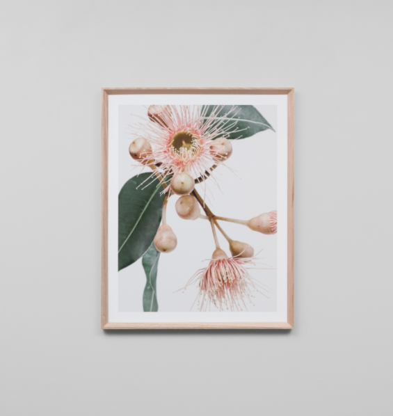 Middle of Nowhere - Eucalyptus Flower 1 Framed Print