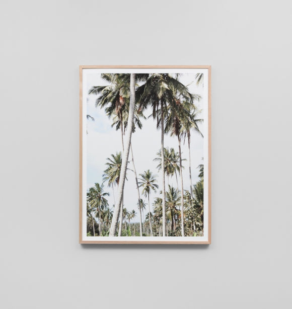 Middle Of Nowhere - Holiday In The Palms Framed Print