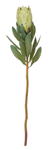 Rogue - Protea Stem - Light Green