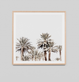 Middle of Nowhere - Sun Palms Framed Print