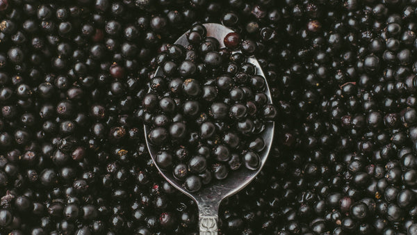 Meet your herbs - Elderberry