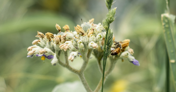 Bees and the ecosystem