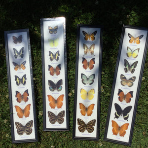 Vertical Butterfly Wall Plaque