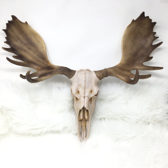 Resin Moose Skull Wall Mount