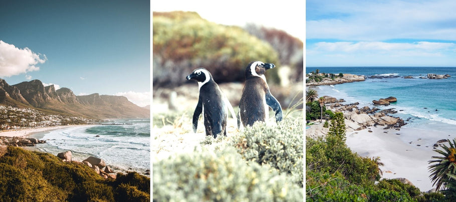 4 Best Beaches in Cape Town, South Africa