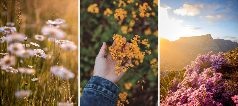 3 of the Blooming Best Places to See Wildflowers Along the West Coast