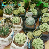 Celestial being plants - 30pcs cactus - potted bonsai plants family anti-radiation