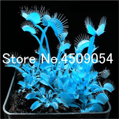 Hot Sale 100 pcs Carnivorous Plants Potted Plant Bonsai Flytrap Bonsai Radiation Protection Plant For Home Garden seedsplants