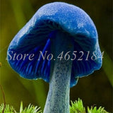 Hot sales! 500 pcs/ bag Mushroom Bonsai Funny Succulent Plant Amazing Edible Health Vegetable For Flower Pot Decor Free Shipping