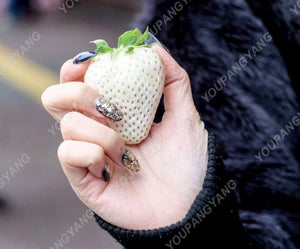 200pcs/bag White Strawberry plants Rare Sweet Organic White Strawberry Fragaria Fruit plants For Home Garden Bonsai Potted Plant