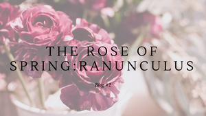 The Rose of Spring: Ranunculus