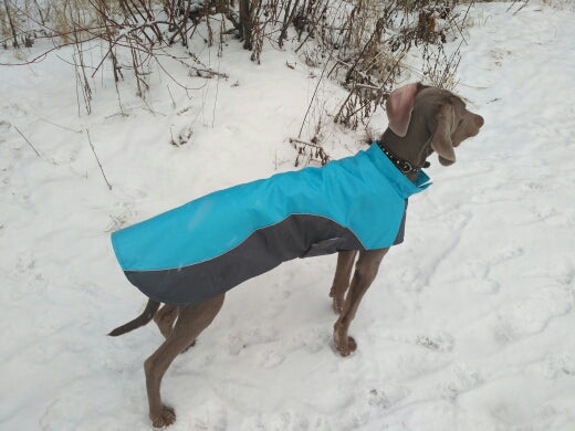 Dog in a jacket standing in snow pet apparel