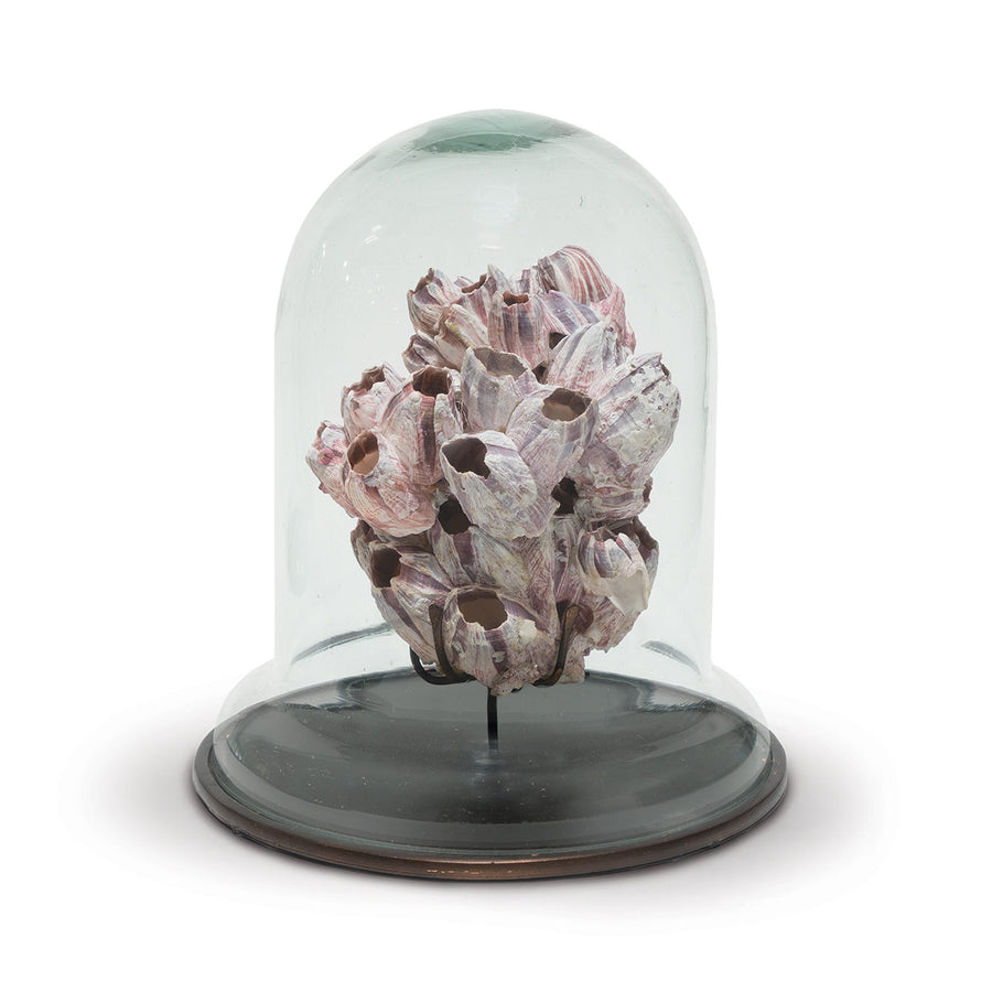 "Cultured barnacles suspended on an antique bronze metal finish base topped with a recycled glass dome.   Measurements 9.75""d x 11""h"