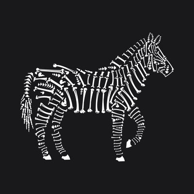 Zebra Bones printed on black Unisex premium tee from Teexpression