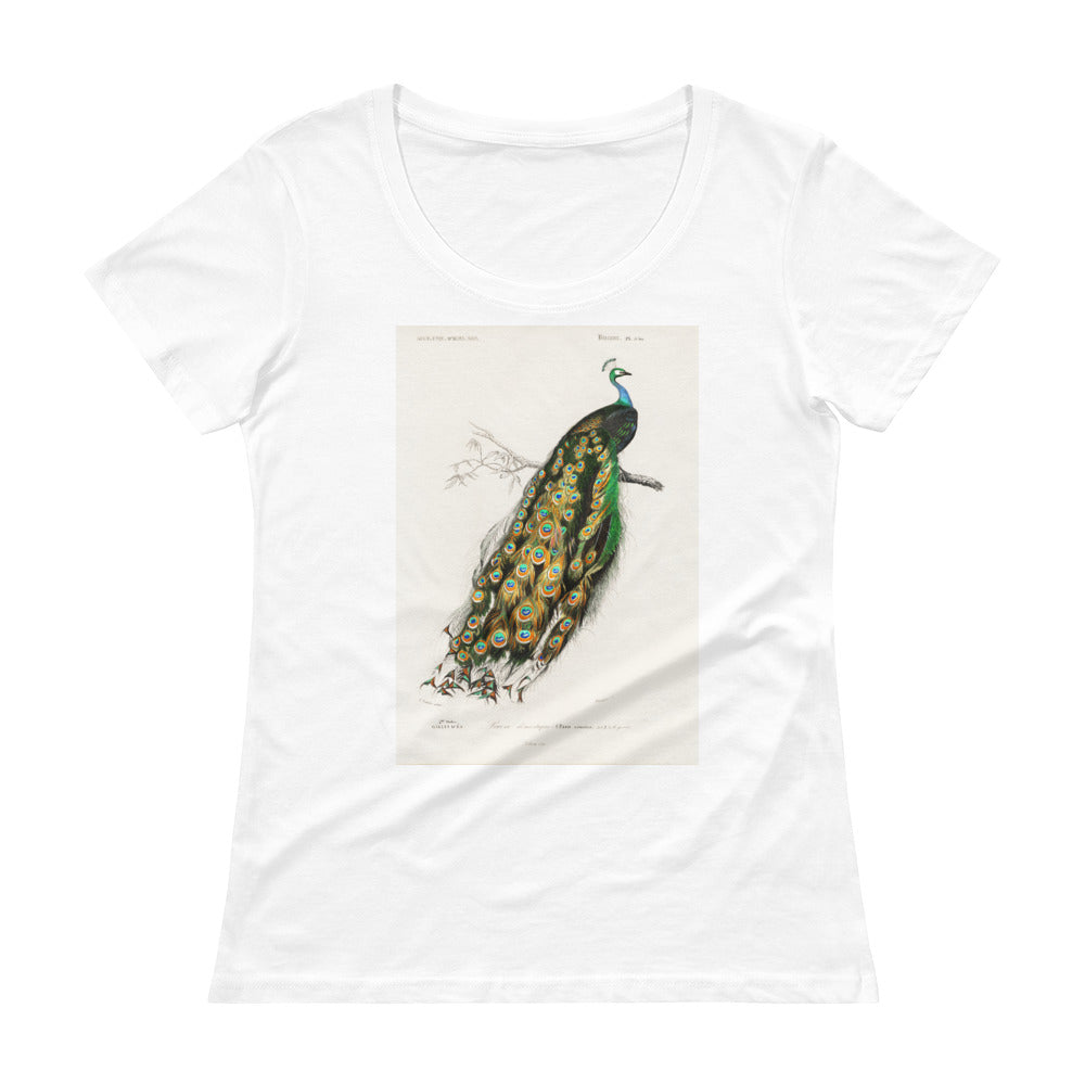 Indian peafowl Pavo Cristatus Women's Scoop Neck Tee