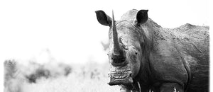 Coffee Mug BW05 White Rhinoceros