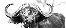 Coffee Mug BW11 Buffalo