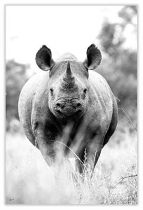 Art Print 590mm x 390mm BW38 Black Rhinoceros
