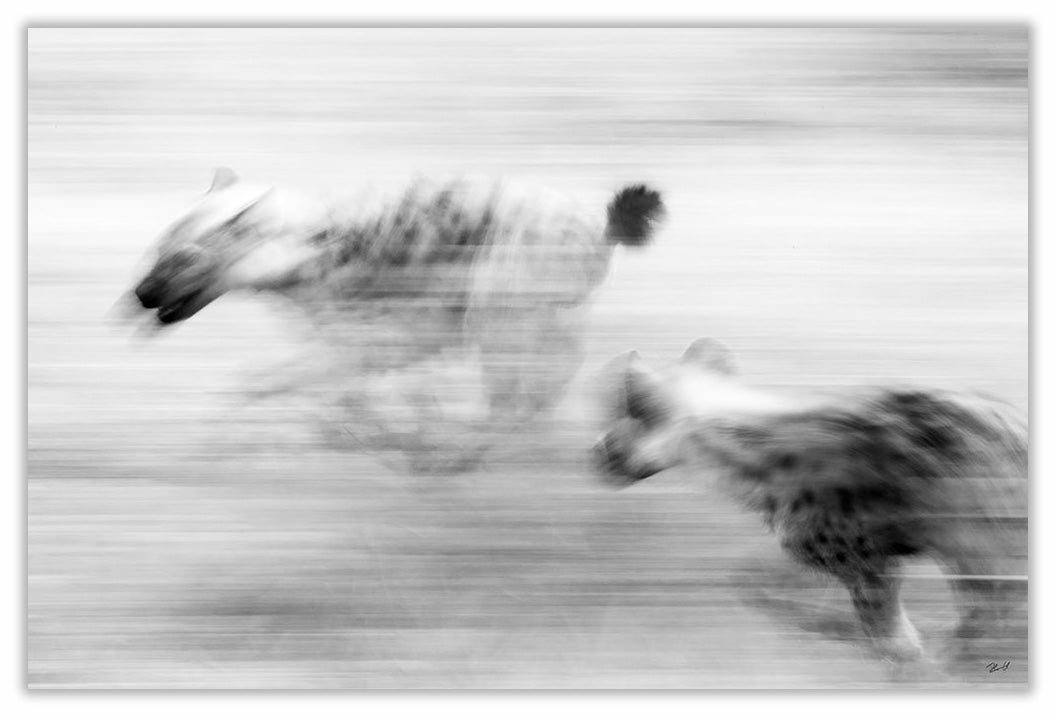 Art Print 590mm x 390mm BW58 Spotted Hyena