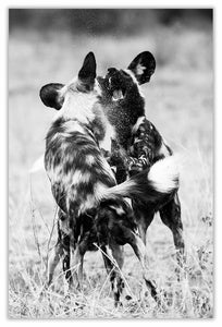 Art Print 590mm x 390mm BW66 Wild Dog