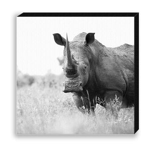 CANVAS 30*30 BW04 White Rhinoceros
