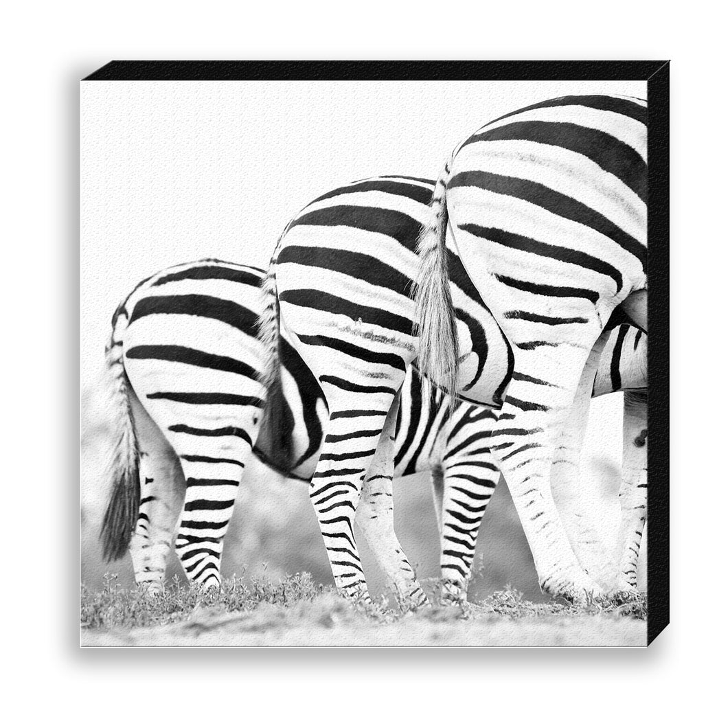 CANVAS 30*30 BW08 Zebra