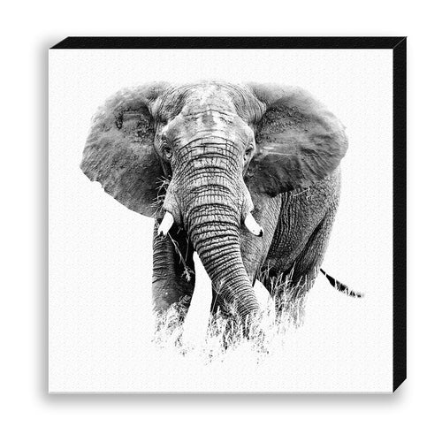 CANVAS 30*30 BW13 Elephant