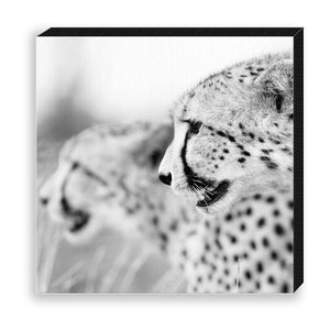 CANVAS 30*30 BW18 Cheetah