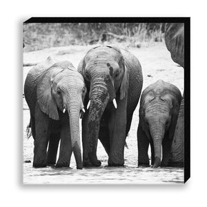 CANVAS 30*30 BW27 African Elephant