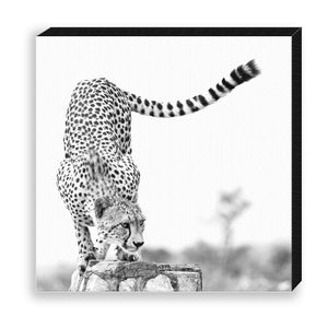 CANVAS 30*30 BW29 Cheetah