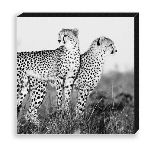 CANVAS 30*30 BW34 Cheetah