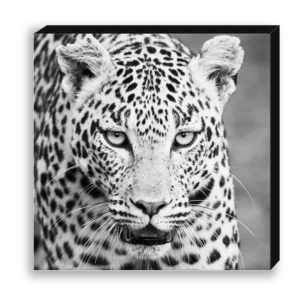 CANVAS 30*30 BW37 Leopard