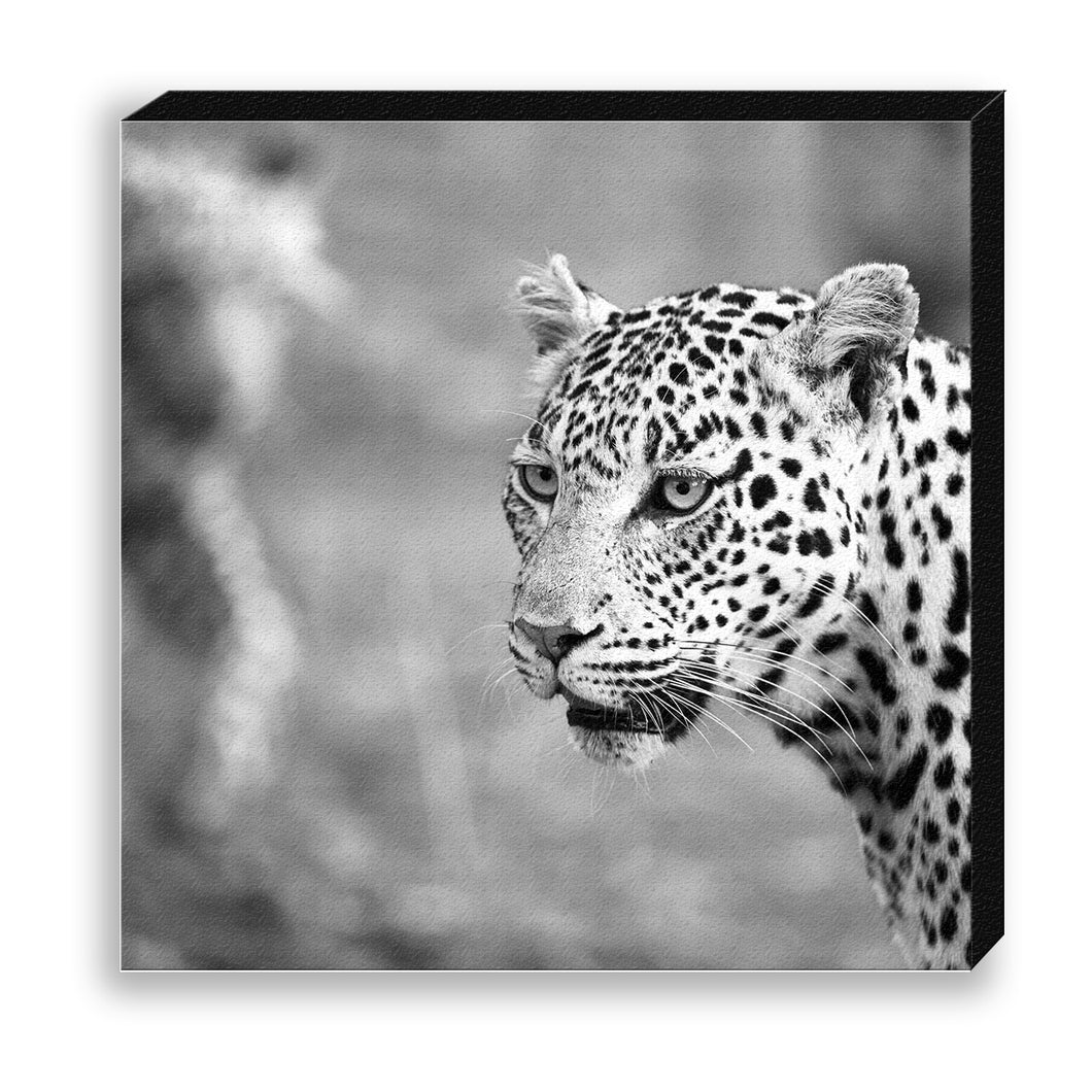 CANVAS 30*30 BW41 Leopard